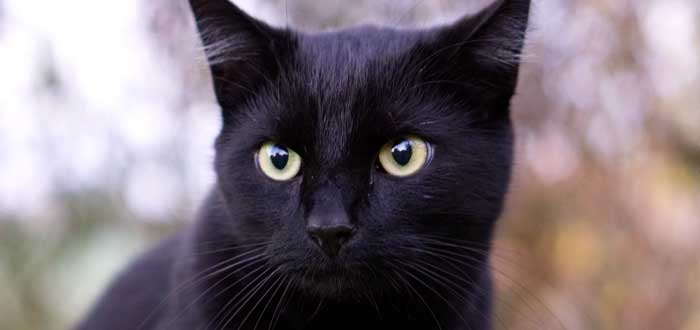 Significado del Gato