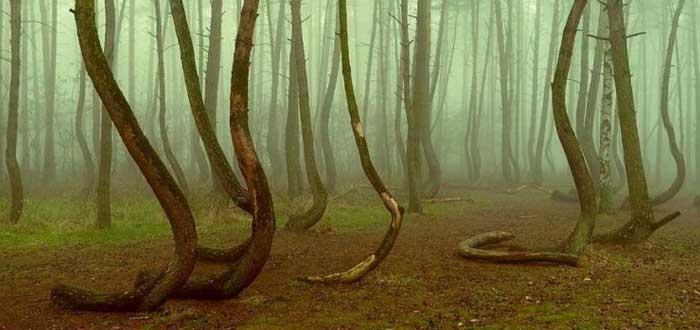 El Misterio del Bosque Retorcido de Polonia | ¿Qué lo causó?