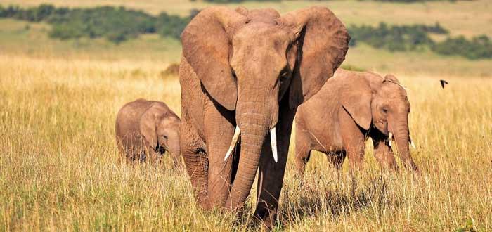 30 Curiosidades sobre elefantes | Criaturas extraordinarias