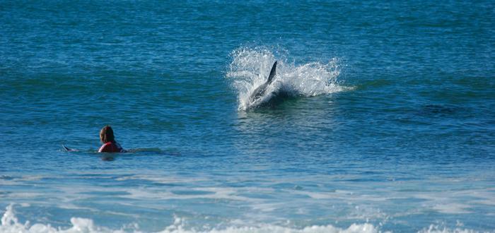delfines que protegieron