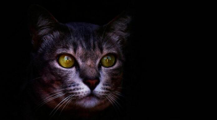 El Significado del Gato como símbolo | 20 Curiosidades