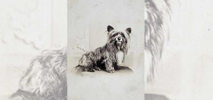 Greyfriars Bobby | La verdad sobre el perro del cementerio de Greyfriars