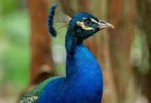 10 animales de color azul