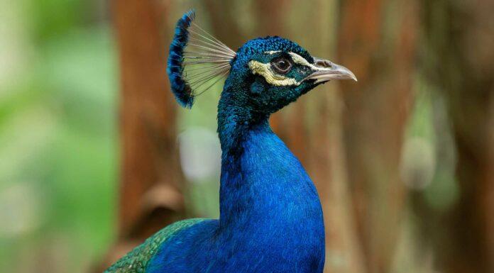 10 animales de color azul