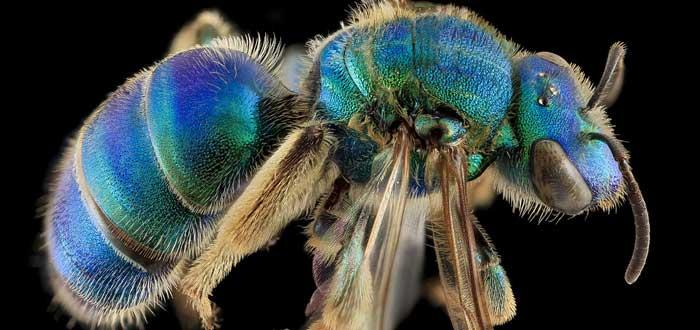 10 Bellos Animales Azules que te asombrarán | [Con Imágenes]