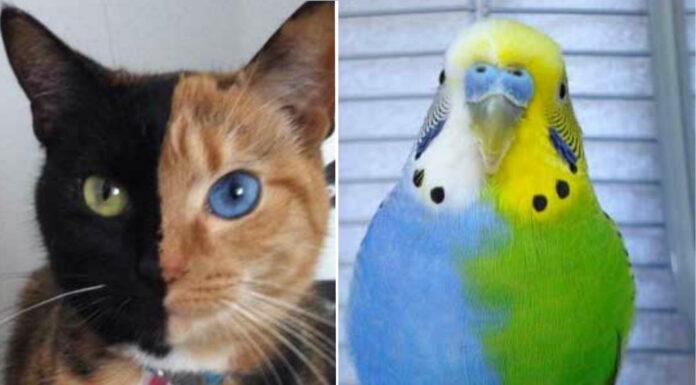 Animales quiméricos | 5 ejemplos que te alucinarán