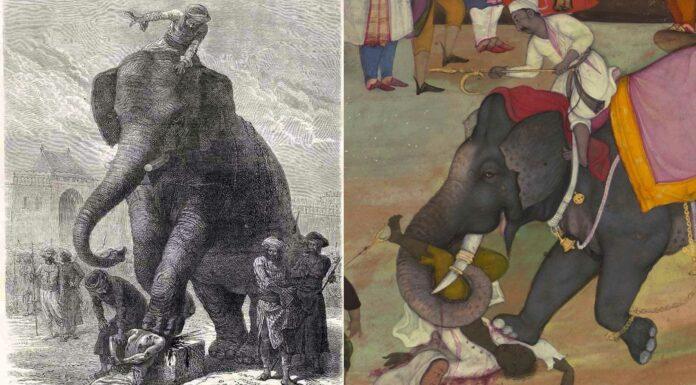 Aplastamiento por elefante | Un terrible método de ejecución