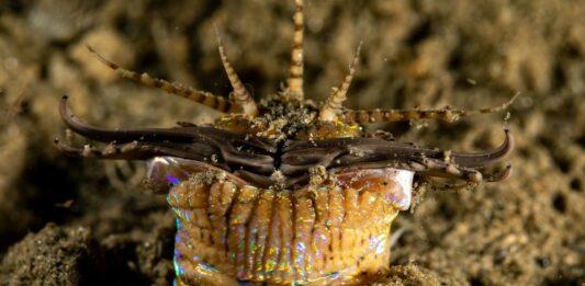 el gusano bobbit