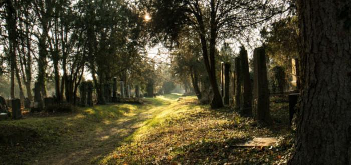 Fantasmas en el cementerio árboles