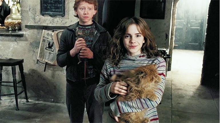gatos y magia