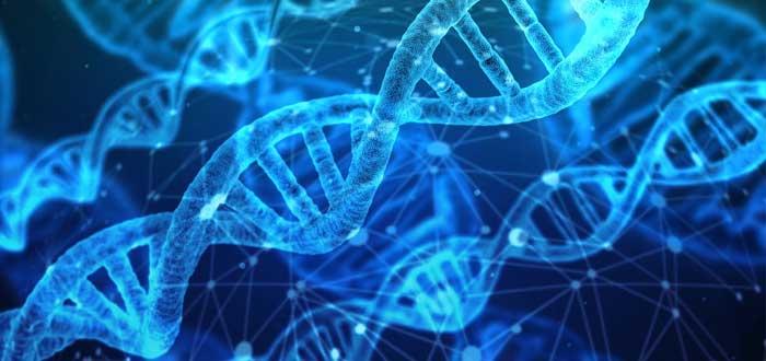 Microquimerismo | Células del bebé que modifican el ADN de su madre