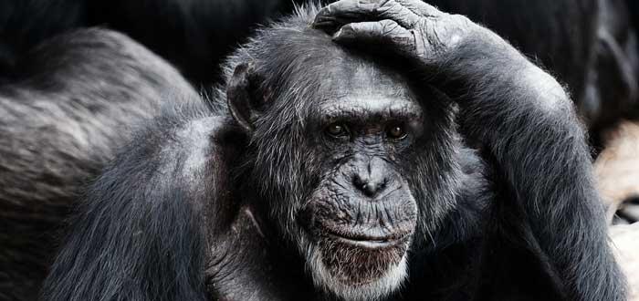 Por qué los humanos perdimos casi todo el pelo corporal