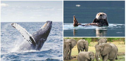 5 Animales con Supersentidos | ¡Absolutamente asombrosos!