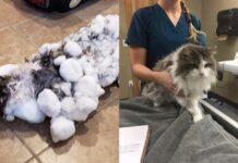 Fluffy, la gata que se congeló y sobrevivió en Montana