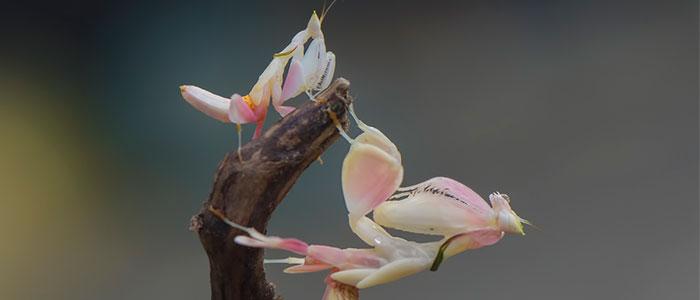 insectos carnivoros