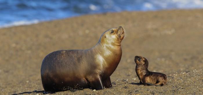 focas bebés