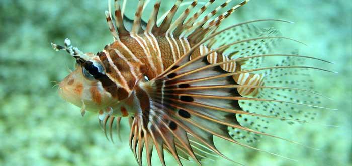 20 Peces Raros del Mundo | Especies que te asombrarán