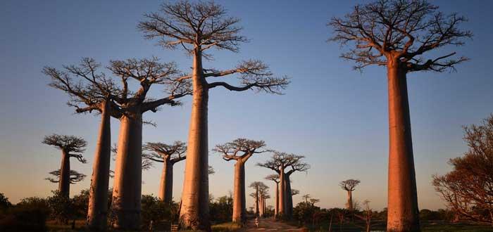 Árboles Raros | Los Árboles más raros del Mundo. ¡Descúbrelos!