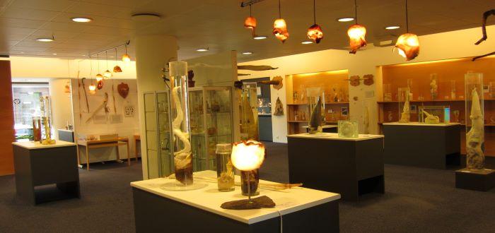 museos raros del mundo 2