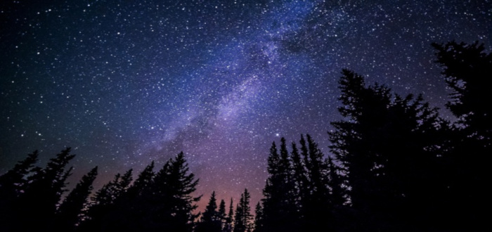 Estrellas del Universo bosque
