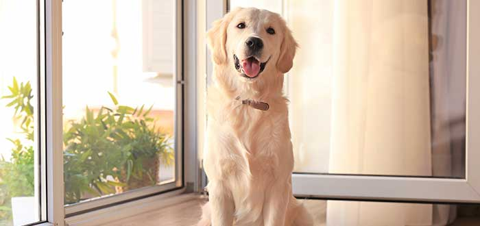 Razas de Perros Bonitos del Mundo | Labrador Retriever