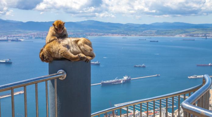 ¿Por qué hay monos en Gibraltar_| ¡Te lo contamos!