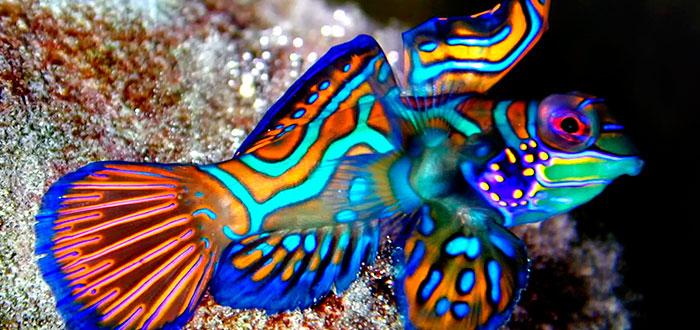 Los peces más raros de todo el mundo 2