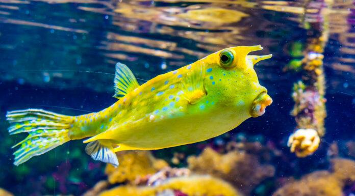 Los peces más raros de todo el mundo