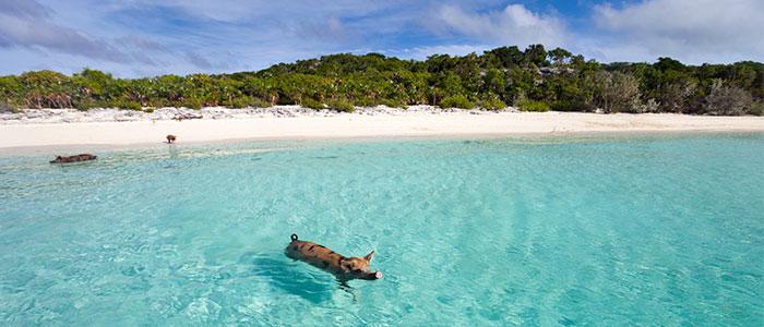 curiosidades de las bahamas
