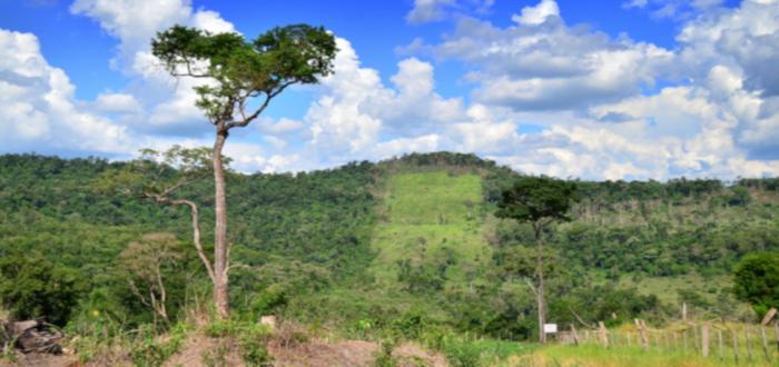 Curiosidades de Paraguay árbol