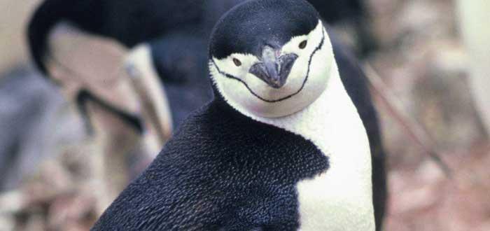 curiosidades de los pingüinos.