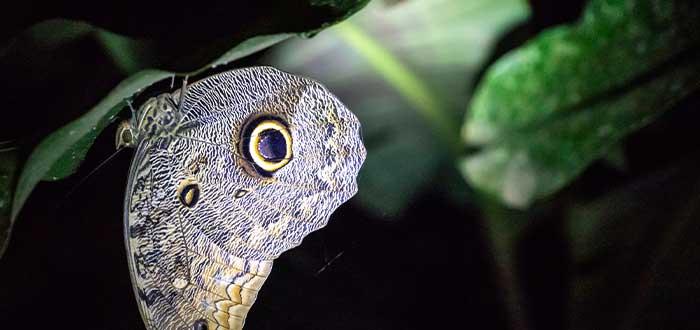 mariposas en bolivia