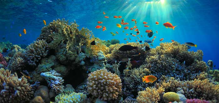 arrecifes en honduras