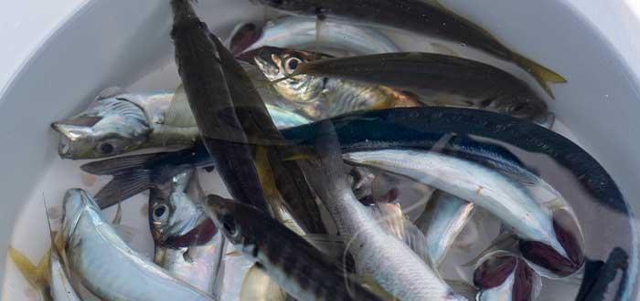 datos curiosos de honduras lluvia de peces