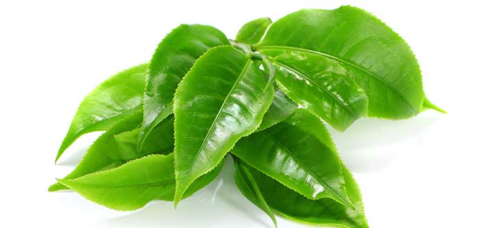 los beneficios del te verde. 1