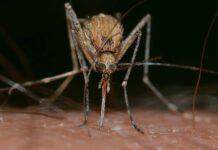 ¿Por qué pican los mosquitos? Descubre cómo evitarlo