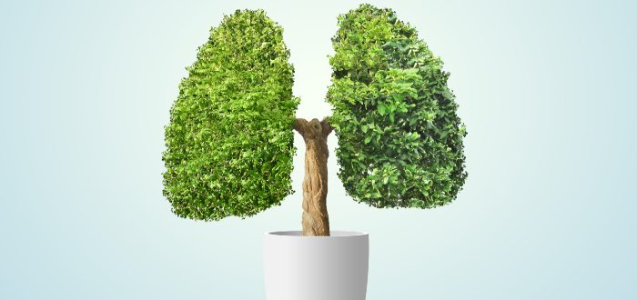 Cuánto aire pueden contener los pulmones