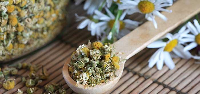 Curiosidades de las plantas medicinales . 1