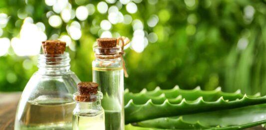 Curiosidades de las plantas medicinales ¡Descúbrelas!