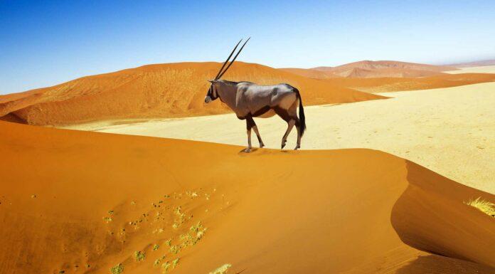 Animales del Desierto | Curiosidades de estas especies