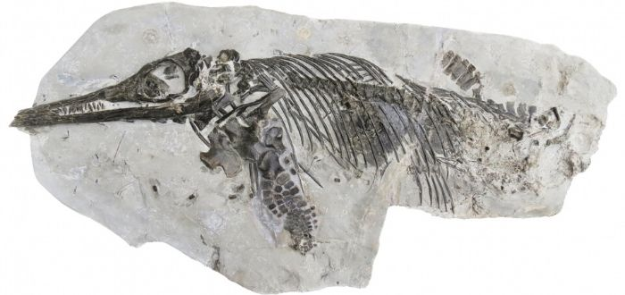 Mary Anning. La primera paleontóloga reconocida