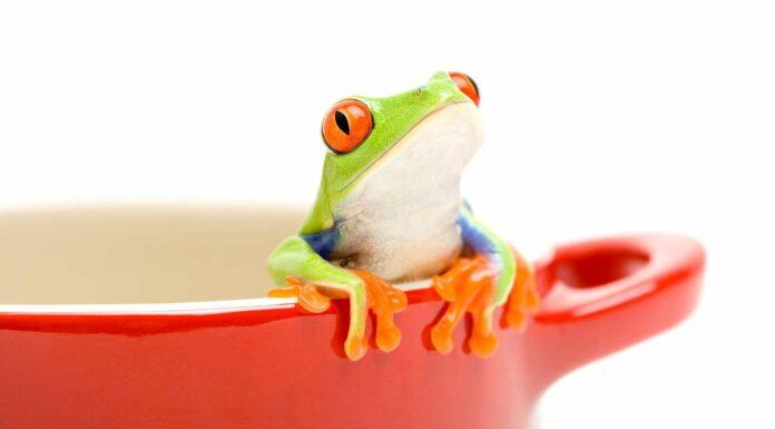 Síndrome de la rana hervida | NO percepción de las amenazas graduales