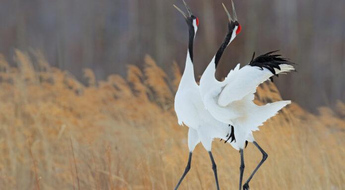 10 Animales de Japón | Endémicos del país del sol naciente