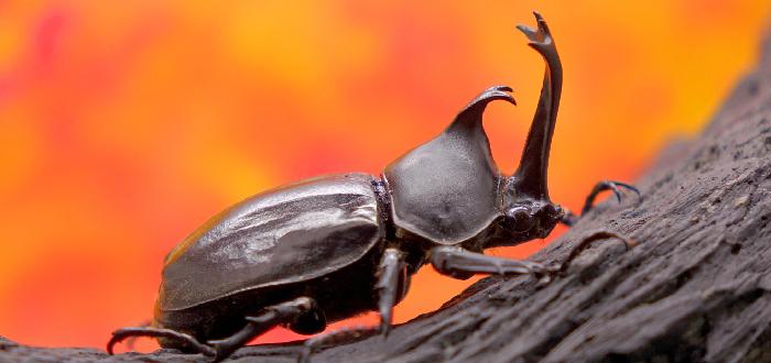 escarabajo rinoceronte japonés en tronco