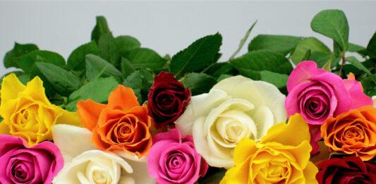 El lenguaje de las flores. qué significa cada una de ellas
