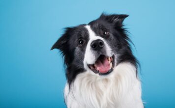 En qué piensan los perros, Su capacidad de razonar y sentir