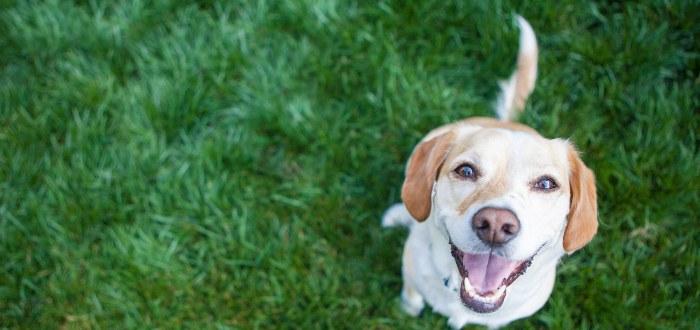 En qué piensan los perros, nos aman o nos manipulan