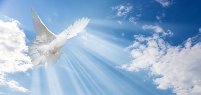 símbolos cristianos, la paloma