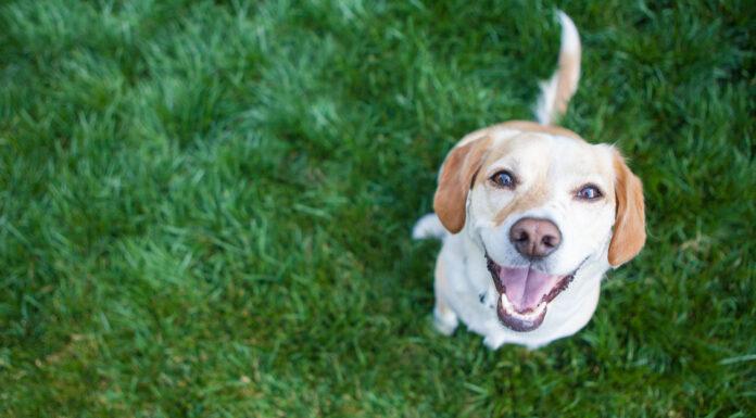 Por qué los perros mueven la cola, Te sorprenderá