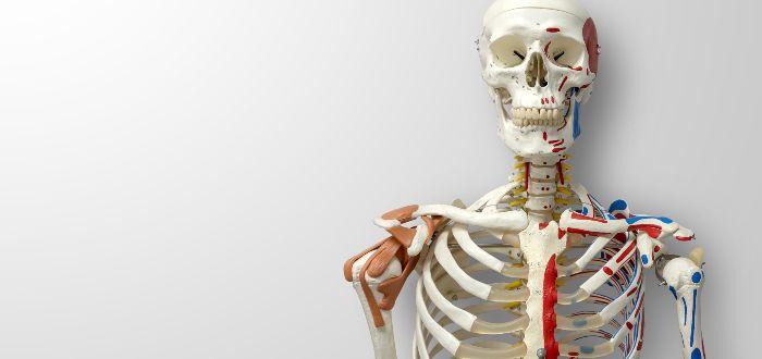 Fase de esqueletización